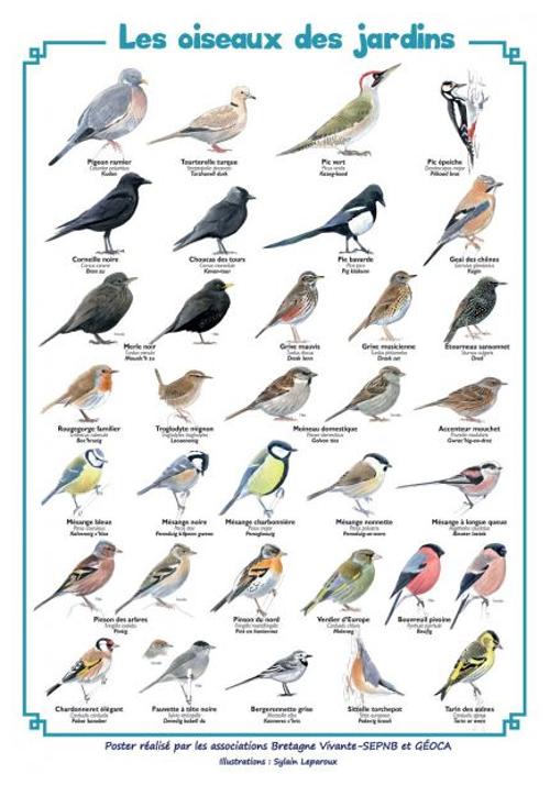 13e Comptage des oiseaux des jardins en Côtes-d''Armor 0